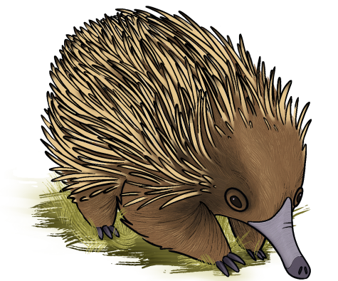 Echidna. Illustration by Ysabelle Magat 21.