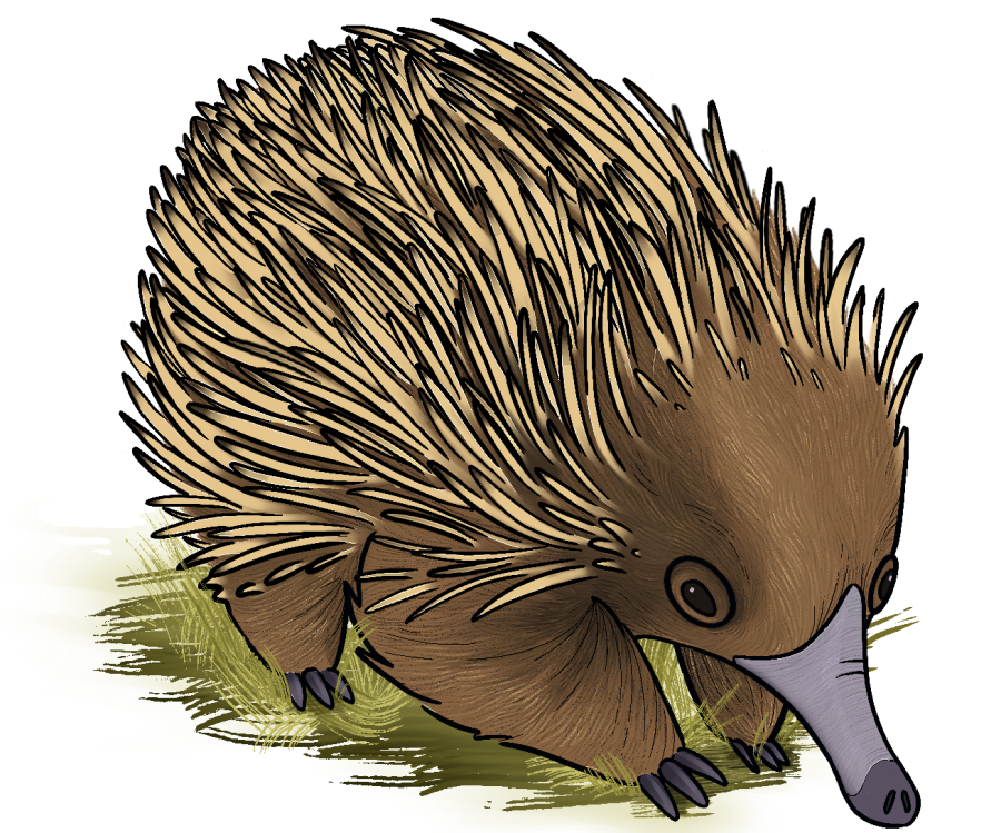 Echidna. Illustration by Ysabelle Magat '21.