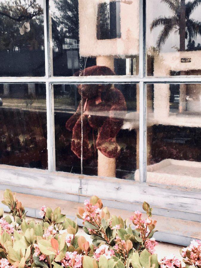 Teddy Bear sits inside a house, looking through a window.